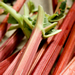 Image for Rhubarb, Local