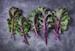 Image for Kale, Purple