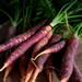 Image for Carrots, Purple Bunched
