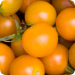 Image for Tomatoes, SunGold Cherry