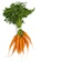 Image for Carrots, Nante